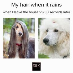 Can I have at least ONE good hair day when it's humid? Hot Hair Styles, Curly Hair Styles, Indian Hairstyles, Cool Hairstyles, Dog Suit, Mini Dogs, Beachy Waves, Good Hair Day, Funny Happy