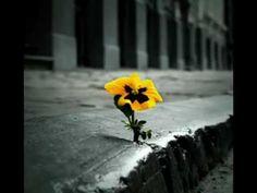 Poema Minha Vida - Francisco Cuoco_xvid.avi  http://carlosvirginia.com/blog/ queres saber quem e o que faço, clica no link