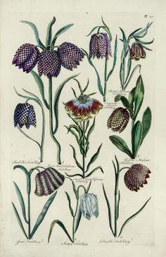 John Hill - Common Purple Fritillary