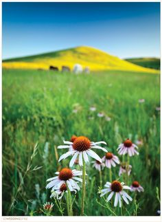 South Dakota Spring Wedding Destinations.