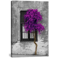 Icanvas 'Tree In Front Of Window' Giclee Print Canvas Art ($98) ❤ liked on Polyvore featuring home, home decor, wall art, backgrounds, art, pictures, grey, canvas wall art, windows picture and ink painting