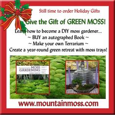 Moss For Sale, Moss Garden, Make Your Own, How To Make, Holiday Gifts, Landscaping, Gardening, Create, Green