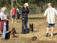 Give your dog a fun training experience. Learn how. Visit http://dogtraining-htq7w5v3.canitrustthis.com