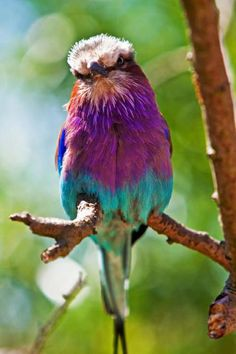 As pretty as a rainbow!