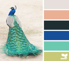 color fowl (minus the last color on the bottom....the black and grey would be my appliances and possibly countertop)