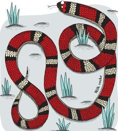 One of the red-heads of the animal kingdom, here is a milk snake. From Creaturepedia. Publishing date: March Milk Snake, Kids Lighting, Red Heads, 4th Of July Wreath, Animal Kingdom, Pattern Design, March, Symbols, Illustration