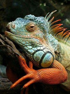ANIMAL ENCYCLOPEDIA #worldzoo #animals http://www.pinterest.com/worldzoo/
