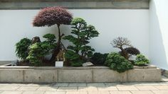 Bonsai Plants at Entrance of Bonsai Garden, Chinese Garden, Singapore Bonsai Plants, Bonsai Garden, Chinese Garden, Tree Art, House Plants, Singapore, Entrance, Backyard, Landscape