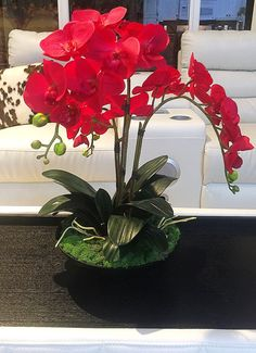 Amazing Orchid Arrangements Ideas To Enhanced Your Home BeautyFaux red orchid centerpiece including three orchid stems, raindeer moss, and phalaenopsis leafs.Resultado de imagen para orchid piece wood - my siteMira lo que he encontrado en AliExpressO Red Orchids, Orchids Garden, Orchid Plants, Phalaenopsis Orchid, Roses Garden, Orchid Flowers, Fruit Garden, Purple Roses, Orchid Flower Arrangements