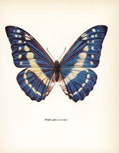 Mid Century Modern Art, Steely Blue Monarch (Butterfly Print, 1960s Butterfly Artist) No. 38-1 door ParagonVintagePrints op Etsy https://www.etsy.com/nl/listing/90674654/mid-century-modern-art-steely-blue