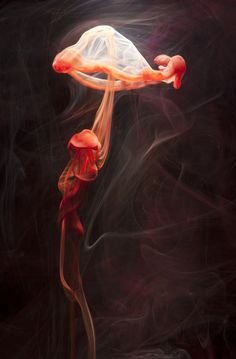 Demersal (creative play of colored fluids) -  Photography by Luka Klikovac. S)