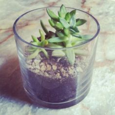 diy succulent terrarium craft. makes a great birthday present, hostess or holiday gift