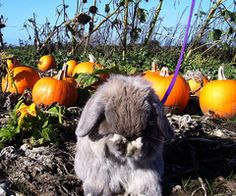 Oh, sorry bunny, no carrots on the vegetable patch this month.
