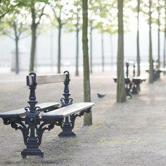 Dawn, Jardin du Luxembourg, Paris by Georgianna Lane