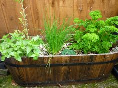 A no-dig garden growing healthy herbs for the kitchen.