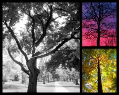 Tall Trees by RDColwellArtPrints on Etsy, $30.00
