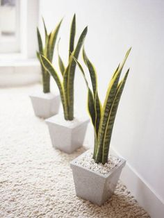 Snake Plant How to care for it: This house plant favors low humidity and also low light, making it great for rooms with few windows. It prefers moist soil throughout the pot and tolerates standard temperatures ranging to about 85 degrees.