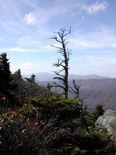 Mountain Lions, Trout and Great Scenery in the Blue Ridge Mountains of North Carolina