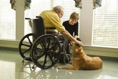 Beneficios de tener una mascota como compañía en la adultez http://www.mascotadomestica.com/articulos-sobre-mascotas/beneficios-de-tener-una-mascota-como-compania-en-la-adultez.html