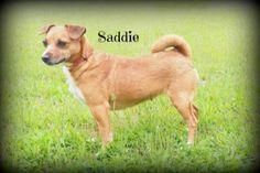 Adopt A Pet: Carl, Saddie, Buddy - Northern Michigan's News Leader
