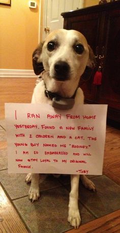 I ran away from home yesterday. Found a new family with 2 children and a cat. The young boy named me Rodney. I am so embarrassed and will now stay loyal to my original family. - Toby | Dog Shaming
