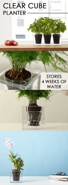 The Clear Cube Planter's transparent design reveals the water, soil and roots of the plant and the natural growth patterns. The clear body also acts as a water reservoir that can store up to 4 weeks of water for your plant through the Slo-Flo irrigation system. It's a convenient and decorative way to bring nature inside your home, office, or classroom!