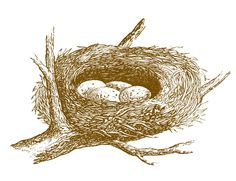 Free Vintage Images – Nest with Eggs