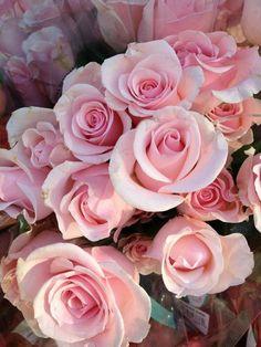 ♔ Roses