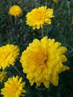 Much yellow
