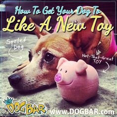 How To Get Your Dog To Like A New Toy – The Dog Bar