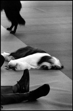 Photo by Elliott Erwitt / Magnum Photos. Book Photography, Animal Photography, Street Photography, Documentary Photographers, Famous Photographers, Elliott Erwitt Photography, Bearded Collie, Magnum Photos, Photo Black
