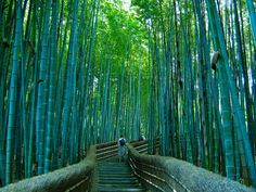 bosque-de-bambu3.jpg 1280×960 pixels