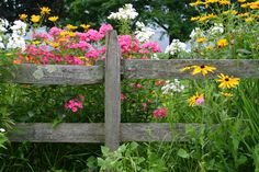 Beautiful Garden Fence Ideas An old rustic fence with weather damage and a bright array of wild flowers popping up all around it.An old rustic fence with weather damage and a bright array of wild flowers popping up all around it. Fence Landscaping, Backyard Fences, Garden Fencing, Pool Fence, Driveway Fence, Bamboo Fencing, Garden Bed, Tall Perennial Flowers, Flowers Perennials