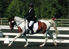 Gypsie - Paint - Tobiano  Pinto  Mare  For Sale @ FLSportHorse.com
