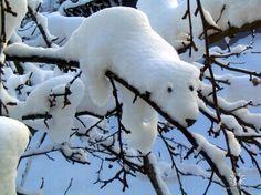 Snow bear on branch - so cute!