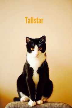 Tallstar: Only Mudclaw, Onewhisker and Firestar were there on his final moments.