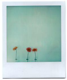 Grant Hamilton's Polaroids