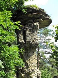 Markušovský skalný hríb,Spiš Slovakia