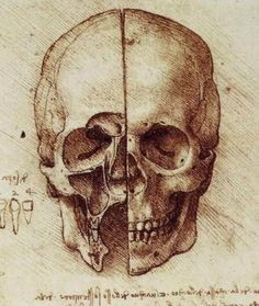 Did you know the first person to illustrate the Maxillary Sinuses was Leonardo da Vinci in 1489.