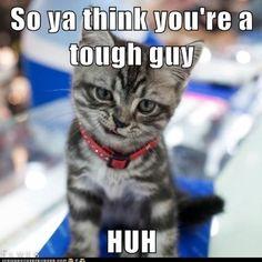 Quiero un gatito