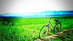 Side of paddy field