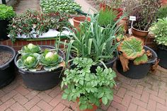Vegetables in containers/RHS Gardening