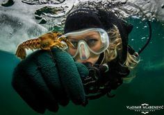 #eistauchen #icediving #weissensee Austria, The Good Place, Amazing, Movie Posters, Movies, Animals, Diving, Films, Animales