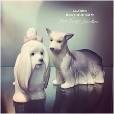 Lladro  Dogs.... The Maltese and Yorkshire Terrier by Lladro available for immediate delivery from the Lladro Boutique SXM and Little Europe Jewellers SXM.  Email: lej@littleeurope.com Phone: 718-874-9674  #maltese #yorkie #lladro #sxm #stmaarten #doglover