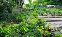 5 Tips to Grow a Food Forest