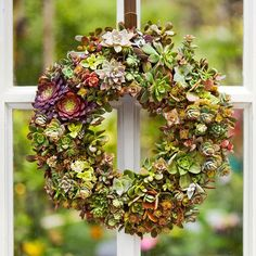 mix succulents in an array of types and colors to craft an eye-pleasing tableau of textures and hues...step-by-step instructions start with a ready-made sphagnum moss wreath. You can also purchase a wire form and sphagnum moss liner separately.