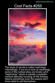 Cool facts #255  http://www.merriam-webster.com/dictionary/nephology  http://www.news-medical.net/health/Nephrology-What-is-Nephrology.aspx  http://www.innovateus.net/earth-matters/how-do-clouds-form