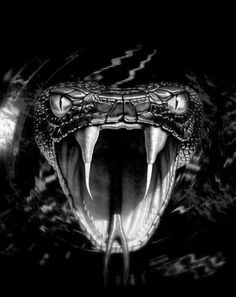 That's scary for me but unfortunately just for what I'm looking for Drachen Scary Snakes, Cool Snakes, Beautiful Snakes, Animals Beautiful, Cute Animals, Kobra Tattoo, Black Mamba Snake, Regard Animal, Snake Wallpaper