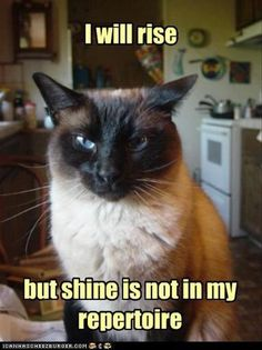 LOLcats is the best place to find and submit funny cat memes and other silly cat materials to share with the world. We find the funny cats that make you LOL so that you don't have to. Funny Shit, Haha Funny, Funny Cats, Funny Animals, Funny Stuff, Animal Funnies, Cat Stuff, Cats Humor, Funny Things