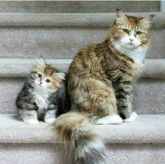 Have you met my mama? #cats #kittens